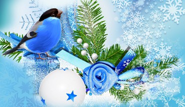 Blue bird winter season HD wallpaper