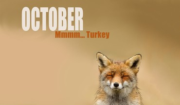 October foxes HD wallpaper