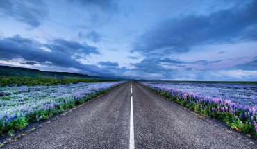 Iceland blue flowers horizon landscapes HD wallpaper