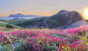 Landscapes nature flowers yellow pink grass hills HD wallpaper
