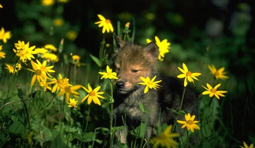 Flowers animals HD wallpaper
