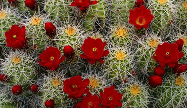 Utah cactus flowers canyon HD wallpaper