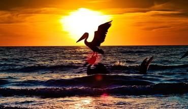 Birds sea sunset HD wallpaper