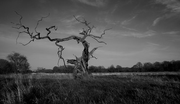 Trees grayscale HD wallpaper