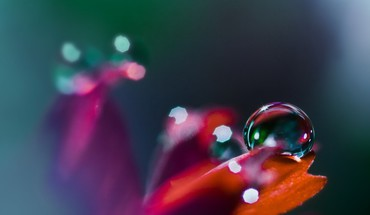 Nature flowers plants waterdrops HD wallpaper