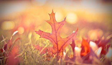 Nature autumn (season) leaves macro HD wallpaper