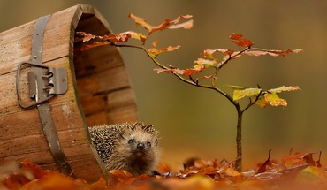 Animals autumn wildlife HD wallpaper
