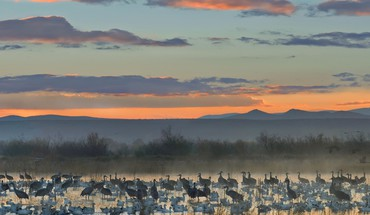 Apache wildlife national cranes new mexico geese HD wallpaper