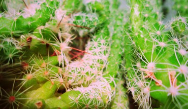 Plants cactus HD wallpaper