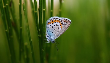 Insects plants butterflies HD wallpaper