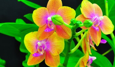 Beauty orchids HD wallpaper