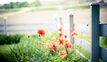 Nature fences depth of field red flowers HD wallpaper