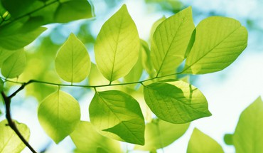 Natural green leaves HD wallpaper