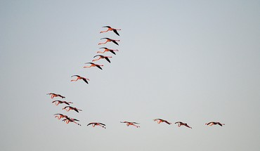 Birds flamingos wildlife HD wallpaper