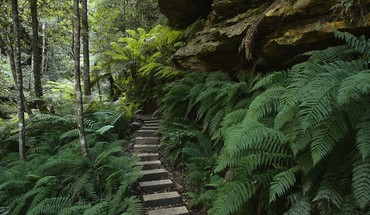 Nature australia national park new south wales HD wallpaper