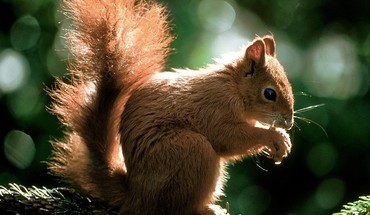 Animals squirrels time HD wallpaper