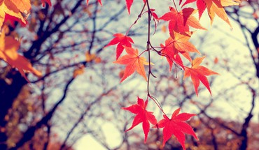 Autumn leaves gamta medziai  HD wallpaper