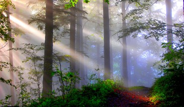 Lighted misty forest HD wallpaper