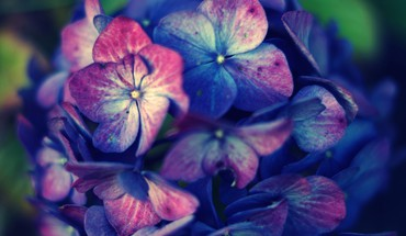 Flowers macro HD wallpaper