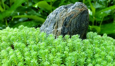 Green close-up nature grass stones plants macro HD wallpaper