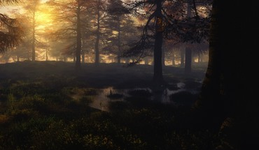 Sunset forest swamps shades HD wallpaper