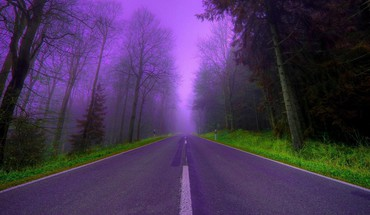 Nature trees purple fog woods roads way HD wallpaper