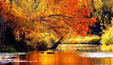 Automne conte  HD wallpaper