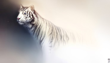 Tigers white tiger artwork background fade haryarti HD wallpaper