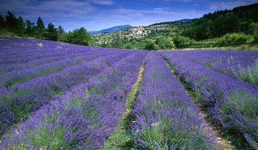 Flowers fields france lavender HD wallpaper