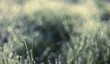 Nature dawn bokeh macro droplet HD wallpaper