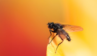 Fly insects macro orange HD wallpaper