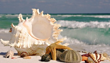 Sea shells by the seashore HD wallpaper