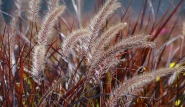 Wild field grass HD wallpaper