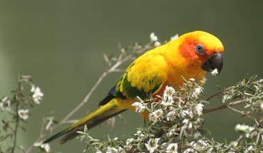Pretty parrot HD wallpaper