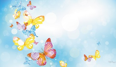 Butterflies many HD wallpaper