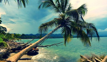 plage de cocotiers  HD wallpaper