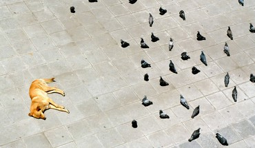 National geographic pigeons lying down courtyard birds HD wallpaper
