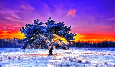 Alone in coldness HD wallpaper