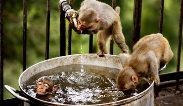 Water animals bathing cage monkeys HD wallpaper
