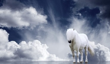 White hors and sky HD wallpaper