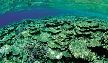 Green underwater coral reef HD wallpaper