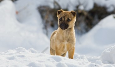 Documentary animals dogs pets snow HD wallpaper