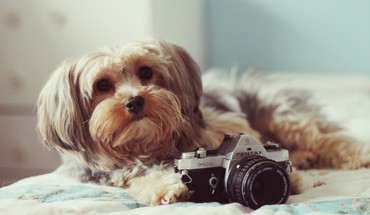 Animals dogs cameras HD wallpaper
