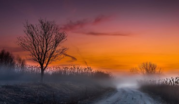 Landscapes nature trees fog roads HD wallpaper