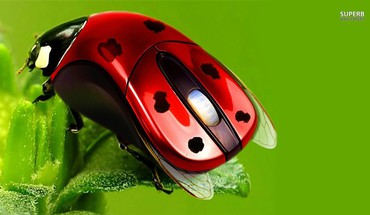 Green mice red HD wallpaper