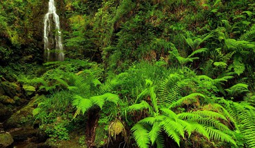 Forests ferns waterfalls HD wallpaper