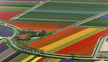 Landscapes multicolor fields holland the netherlands HD wallpaper