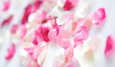 Pink flower petals HD wallpaper