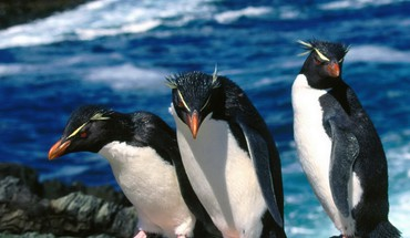 Penguins Felsen  HD wallpaper