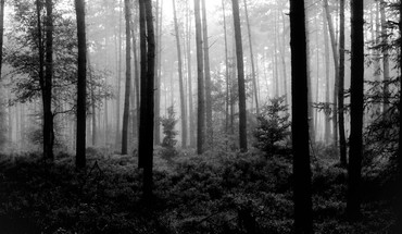 Trees forest national geographic monochrome HD wallpaper